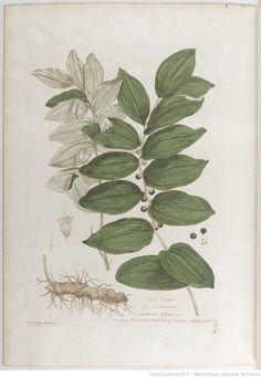 Sceau de Salomon, La botanique mise à la portée de tout le monde... Exécuté et publié par les Sr et De Regnault.... Tome 1 | 1774