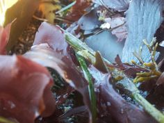 Seaweed is beautiful