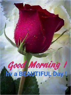 Dew on rose bud Good Morning Flowers, Good Morning Good Night, Good Morning Wishes, Good Morning Images, Morning Pics, Morning Dew, Beautiful Morning, Beautiful Roses, Beautiful Flowers