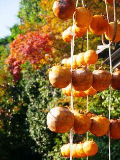 Japan Zen Taizo-in Temple / Dried persimmon