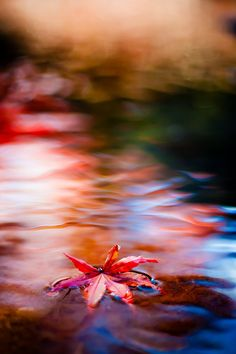 Farbenspiel Momentaufnahmen mit Flair