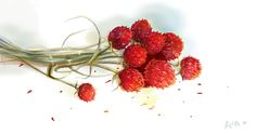 Dry, Flower, 꽃, 일러스트레이트 Raspberry, Fruit, Food, Essen, Meals, Raspberries, Yemek, Eten