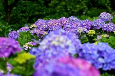 Colorfully | Flickr - Photo Sharing!