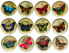 Butterfly Pinback Button Badge Pin Set Or Choose Pretty Butterflies Flowers Butterfly Flowers, Butterflies, Tiny Shop, Printable Pictures, Button Badge, Badges, Decorative Plates, Cap, Buttons