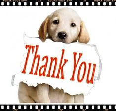 We just passed 100 sale on #Etsy, thank you for making it possible!  To #celebrate, we wil be donating $100 to the #rescue we are working with now, Another Chance for #Animals in Indiana.