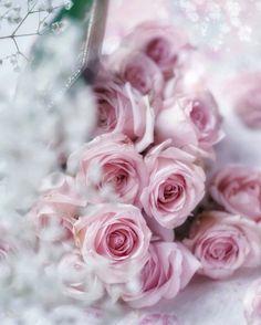 Beautiful Flowers Wallpapers, Beautiful Roses, Beautiful Gardens, Flower Phone Wallpaper, Pink Wallpaper, Little Flowers, All Flowers, Flower Bouqet, Happy Birthday Flower