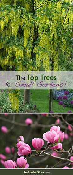 Beautiful!  The Top Trees for Small Gardens. This would be for out in our front yard.