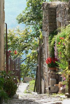 Pretty street in the hilltop town of Motovun, Croatia (by David Lownds).