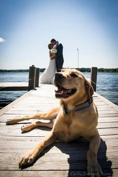 A bride and groom kiss on the dock with their dog.