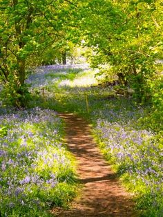 Woodland Path through Yoxall Lodge Bluebell Woods, Staffordshire, England . Photo by Graham Taylor . Woodland Path through Yoxall Lodge Bluebell Woods, Staffordshire, England . Photo by Graham Taylor . Landscape Photography, Nature Photography, Landscape Art, Landscape Paintings, Image Nature, Woodland Garden, Nature Tree, House Nature, Art Nature