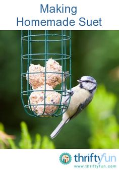 This is a guide about making homemade suet. You can attract many birds by putting out suet cakes. You can easily make suet cakes at home and vary them to your local bird species.