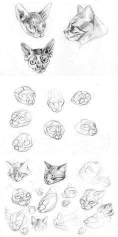 cat's head studio by sofmer on DeviantArt Animal Sketches, Animal Drawings, Drawing Sketches, Cool Drawings, Drawing Studies, Art Studies, Bastet, Cat Drawing Tutorial, Cat Anatomy