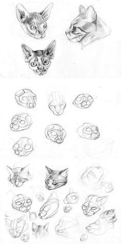 Estuve tratando de entender a los gatos usando fotos como referencia, salvo en la ultima hoja donde use a mis gatos de modelos vivos (izquierda Midas derecha Ivan). Ha, queria recomendarles, si les...