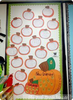 Non-fiction pumpkin