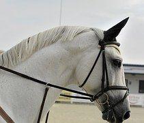 Häst, Djur, White, Natur, Gården, Hingst