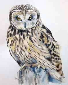 Uszatka błotna , akwarela 24x32cm #illustration #design #roomdesigne #decor #dog #huntingdog #handmade #homedecor #homeinspo #interior #elledecor #forest #bird #falcon #harrypotter #art #details #owl #nature #animal #hunter #wild #falcon #falconry #hunt #home #birds #art #eagle #model #moda http://misstagram.com/ipost/1566618162827427450/?code=BW9vus2AP56