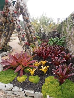 Bromeliads in Auckland Botanical Gardens