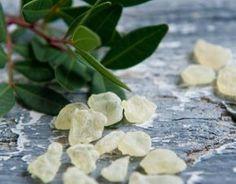 Mastic Gum Mastiha Masticha Large Fresh Natural Tears of Greek Chios Island Mastic Tree, Mastic Gum, Chios Greece, The Kitchen Food Network, Simple Minds, Chewing Gum, Greek Recipes, Sugar And Spice, Food Network Recipes