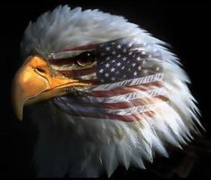 Best american flag Pictures Ever | AGW anthropogenic Climate Change environmentalist Global Warming ...