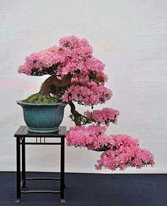 I love this Bonsai