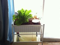 Picture of Indoor Mini Aquaponics System (IKEA-hack)