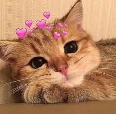 Cute animal/pets can make you smile - kittens Cute Baby Cats, Cute Cats And Kittens, Cute Funny Animals, Cute Baby Animals, Kittens Cutest, Funny Dogs, Wild Animals, Cute Cat Memes, Cute Love Memes