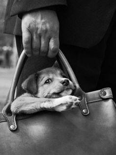 doggie bag ♡... Re-pin by StoneArtUSA.com ~ affordable custom pet memorials for everyone.