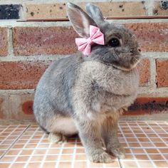 ♥ Pet Rabbit Ideas ♥ Baby pink bows for bunnies pet rabbit bows pet by HealthyNibbles