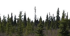 forest background png - Google Search