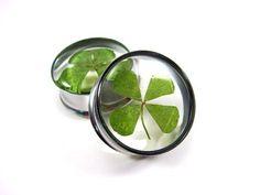 Real 4 Leaf Clover Embedded Plugs gauges  by mysticmetalsorganics, $24.99