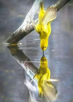 New Bird Photography Art Beautiful Ideas All Birds, Little Birds, Love Birds, Pretty Birds, Beautiful Birds, Animals Beautiful, Photo Animaliere, Photo Chat, Nature Animals