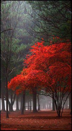 Red Tree: Yein Beautiful photography and beautiful tree Beautiful World, Beautiful Places, Trees Beautiful, Beautiful Castles, Red Tree, Tree Photography, Color Photography, Landscape Photography, Naturally Beautiful