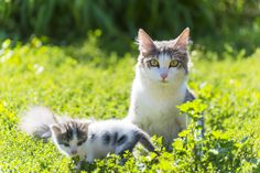 Feral cats and kittens are killed as an ineffective way to control the feral cat population. Trap, Neuter, and Release programs help control cat populations and improve their health. Sign this petition to stop euthanasia of feral cats.