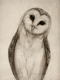Barn Owl Sketch Art Print by Isaiah K. Stephens | Society6