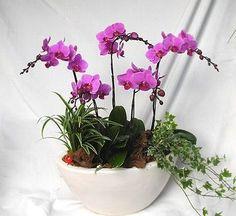 como-cultivar-orquideas-em-vasos