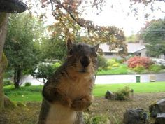 """""""I think you forgot to put out my squirrel food!"""""""