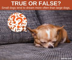 """Just like us, dogs start to twitch and can even """"talk""""in their sleep. Find out if it's true from our blog. http://ow.ly/GwJm30fIiuG #tailoredpetservices #petsitting #doglife #bestwoof #lovedogs #dogwalking #lovepets #doglovers #dogsitters #dogwalk #washingtondogs #happydog #spoiledpets #happydogsclub #dogstagram #petstagram #instapet #instapup #instawoof #instadog #activedogsofinstagram #dogsofig #dogsofinstagram #petstagram #pupstagram #cutenessoverload"""