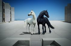 www.pegasebuzz.com   Equine photography : Andrey Vasilyev