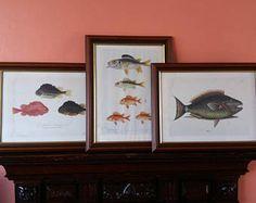 Vintage framed print * fish framed print * natural history print * Gosta Sundman fish print * Antique picture * fishes of Finland *fisherman -    Edit Listing  - Etsy