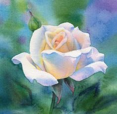 SOFT LIGHT flower rose watercolor painting, painting by artist Barbara Fox