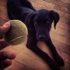 Deki...la palla!