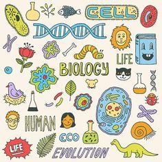 virus apuntes biology doodles Biol - virus Biology Drawing, Science Drawing, Biology Art, Science Biology, Science Art, Science Experiments, Science Quotes, Drawing Drawing, Physical Science