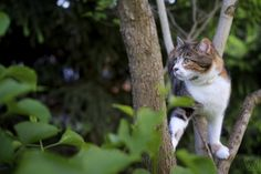 Cat in tree by mr.walter144, via Flickr
