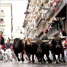 San Ferminl - gives detailed information about San Fermin Traditional Festival. Explore san fermin dates, san fermin celebrations, facts and highlights of Running of Bulls Festival and get information on San Fermin festival Spain. Pamplona, African Buffalo, Running Of The Bulls, World Festival, Basque Country, Bullies, Cows, Animal Drawings, Rodeo