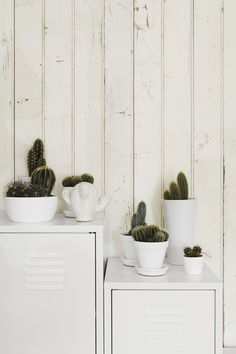 Indoor plants and cactus. An assortment of different house plants and foliage. Green rooms and rooms with potted plants.