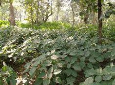 Image result for shrubs in forest