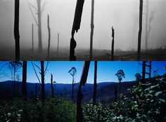 Before and After photos of the impact of the Black Saturday Bushfires  Found on:  https://www.google.com.au/search?q=black+saturday+bush+fires&hl=en&source=lnms&tbm=isch&sa=X&ei=JexfUe2qII2aiAf2sIG4CQ&ved=0CAYQ_AUoAQ&biw=1018&bih=704#hl=en&tbm=isch&q=black+saturday+bushfires+aftermath&imgrc=CZGZQbJNHbE-LM%3A
