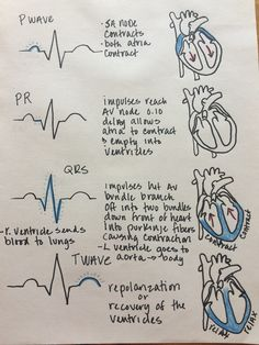 Electrical Events of the Cardiac Cycle, ECG and electrical activity of the heart - NCLEX Quiz Cardiac Cycle, Cardiac Nursing, Pharmacology Nursing, Ob Nursing, Funny Nursing, Pathophysiology Nursing, Study Nursing, Med Surg Nursing, Nursing Tips
