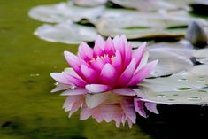 Organic Horticulture, Organic Gardening, Gardening Tips, Gardening Services, Gardening Apron, Vegetable Gardening, Ponds For Small Gardens, Meditation Music, Online Meditation
