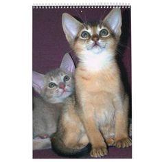Abyssinian kittens & Cats Calendar #cat #cats #kitten #catproducts